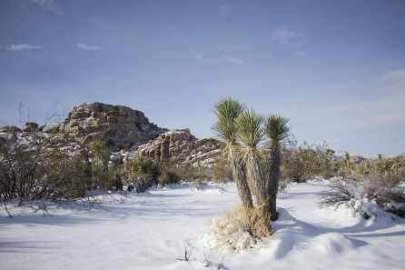joshua tree-landscape-scenic-winter-snow