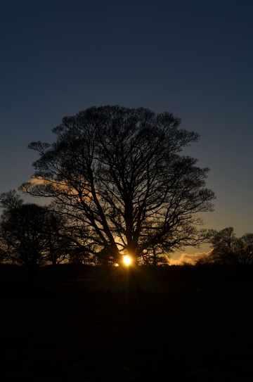 winter-solstice-tree-sun